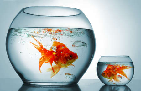 gold fish bowl: A big bowl and a small one with goldfish