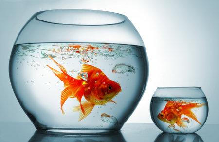 Eine große und eine kleine Schüssel mit Goldfish Standard-Bild