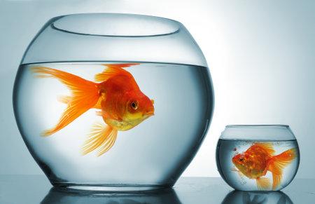 unequal: Un taz�n grande y uno peque�o con peces de colores Foto de archivo