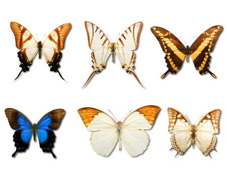 dainty: Collage of six different butterfly on white background