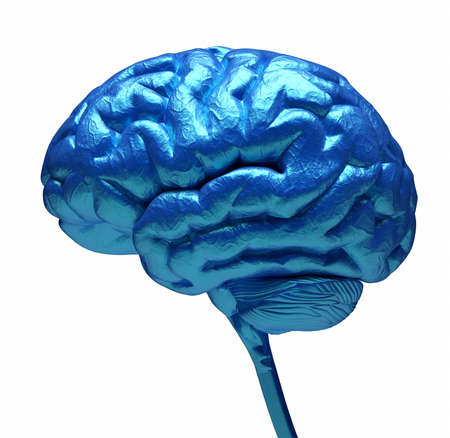 Conceptual image of a blue brain over white - 3d render photo