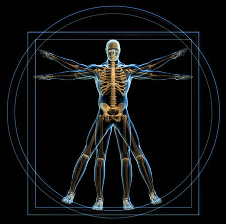 inscribed: Body and skeleton in vitruvian man  - 3d render Stock Photo