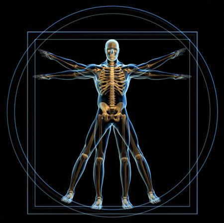 vitruvian man: Cuerpo y esqueleto en vitruvian man - 3d de procesamiento  Foto de archivo