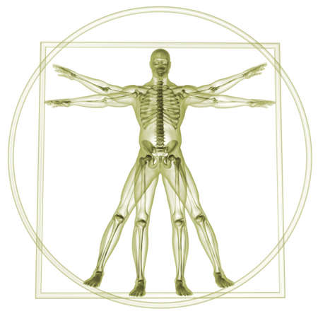 da vinci: Body and skeleton in vitruvian man  - 3d render Stock Photo