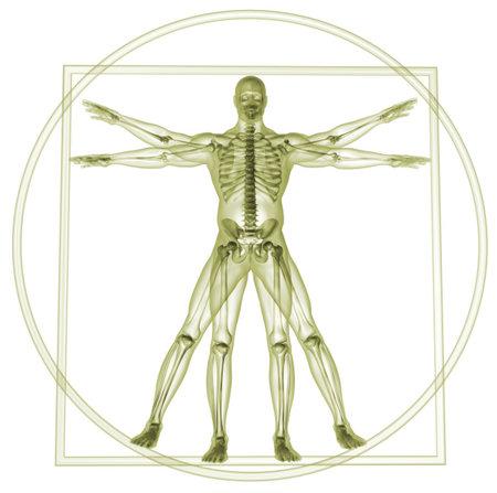 skelett mensch: K�rper und Skelett in Vitruvian man - 3d render