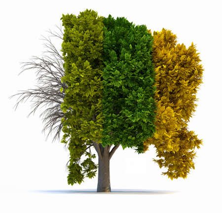 season: Conceptual tree in four seasons - 3d render illustration Stock Photo