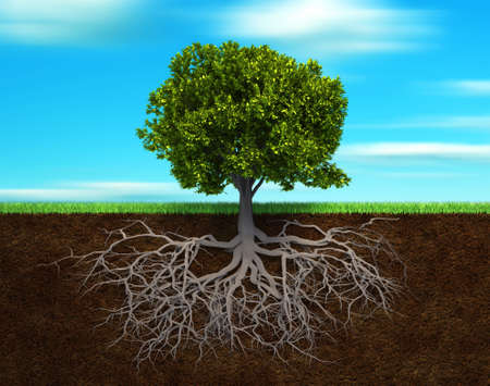 strong roots: Section in soil showing the root of a tree - 3d render illustration