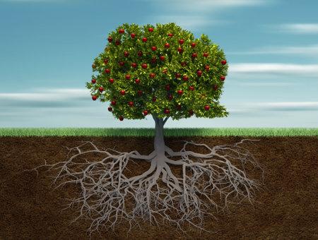 Apple tree: Fruiter - questo � un 3d rendering illustrazione