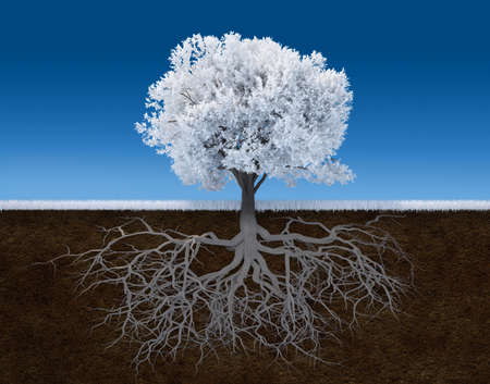 strong foundation: 3d render illustration of a white tree with root Stock Photo