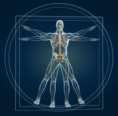 anatomy: Body and skeleton in vitruvian man - this is a 3d render illustration