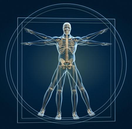 leonardo davinci: Body and skeleton in vitruvian man - this is a 3d render illustration