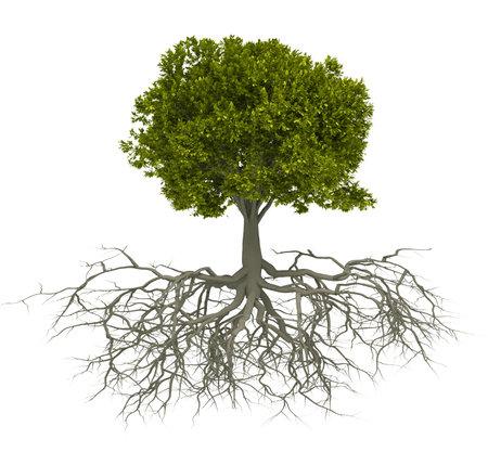 Árbol con raíz aislado sobre blanco - esto es una ilustración de render 3d