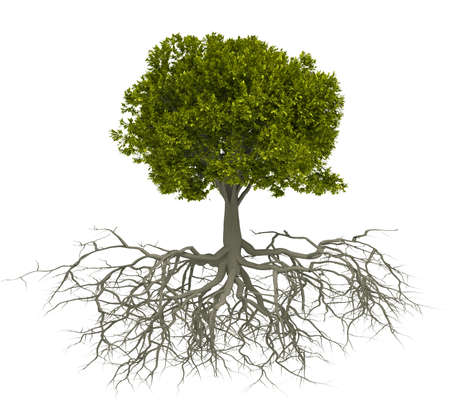 strong roots: Tree with root isolated over white - this is a 3d render illustration Stock Photo