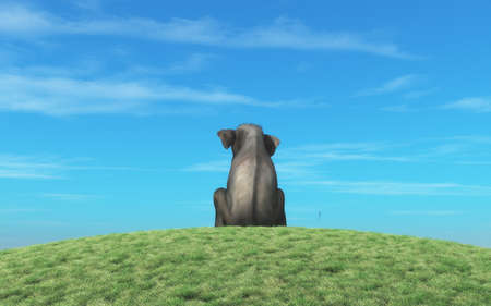 Elephant sits atop a hill and look to the horizon. This is a 3d render illustration Stock Photo