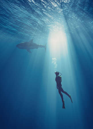 Young swimmer take the race with dolphins in sea. This is a 3d render illustration Banque d'images