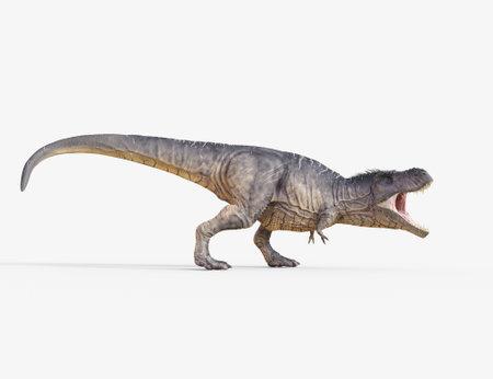 3d rendono il dinosauro - trex il bianco. Questo è un esempio di rendering 3d Archivio Fotografico - 81264320