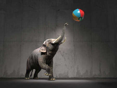 An elephant plays with a beach ball. This is a 3d render illustration Stock Photo