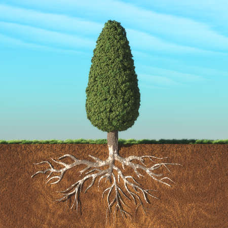 Cone tree with root. This is a 3d render illustration Stock Photo