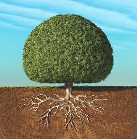 A perfect tree with green leaves in the shape of sphere with roots underground. This is a 3d render illustration