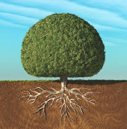 Un árbol perfecto con hojas verdes en forma de esfera con raíces subterráneas. Esta es una ilustración de render 3d