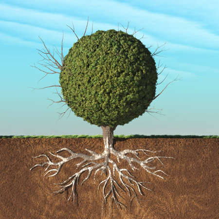 A tree with green leaves in the shape of sphere with roots underground. This is a 3d render illustration Stock Photo