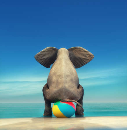 An elephant on a beach ball on the seashore. This is a 3d render illustration Stok Fotoğraf