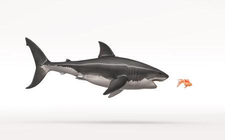 De witte haai valt een goudvis op een witte achtergrond aan. Dit is een 3d render illustratie Stockfoto
