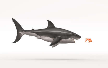 White shark attack a goldfish on a white background. This is a 3d render illustration Banco de Imagens
