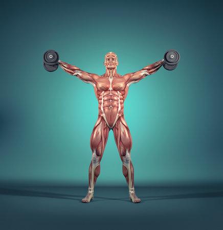 Sportman verhogen kleine halters - gewichten. Het spierstelsel. Dit is een 3d render illustratie