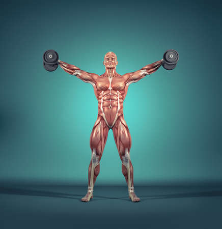 Sportsman raise small dumbbells - weights. The  muscular system.  This is a 3d render illustration 版權商用圖片