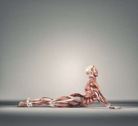 Man performs ground exercises. The muscular system.  This is a 3d render illustration Banco de Imagens