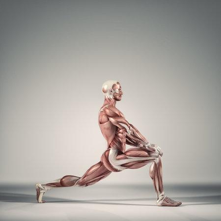 男は地面の演習を行います。筋肉系。 これは 3 d レンダリング図です。