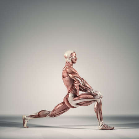 Man performs ground exercises.The muscular system.  This is a 3d render illustration 스톡 콘텐츠