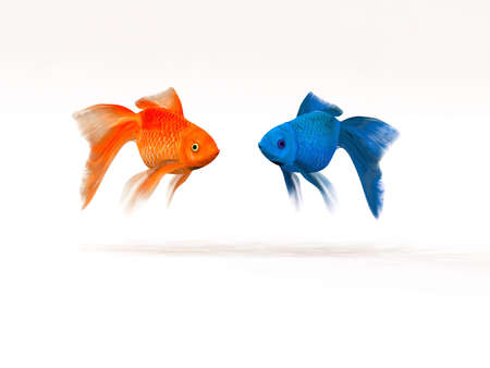 The two goldfish differently. This is a 3d render illustration