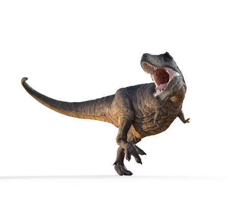 3d render dinosaur - trex white on white background. This is a 3d render illustration Stock Photo
