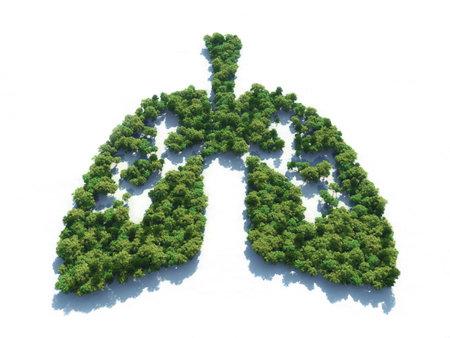 Imagen conceptual de un bosque en forma de pulmones - Ilustración 3d Foto de archivo