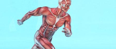 Funcionamiento del sistema muscular masculino. Esta es una ilustración de render 3d