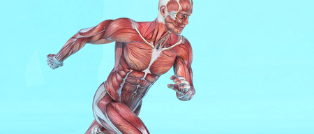 Male muscular system running. This is a 3d render illustration Stock Photo