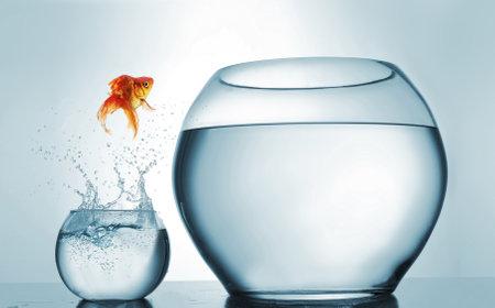 Skoki na najwyższy poziom - skoki złotej rybki w większej misce - koncepcja aspiracji i osiągnięć. To jest ilustracja renderowania 3D