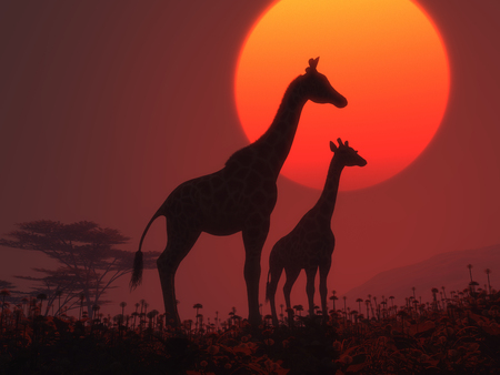 silhouette of two giraffes at sunset.