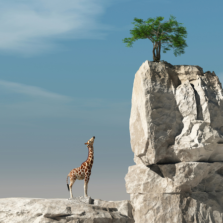 Giraffe looks up to a tree on a rock. The concept of accomplishment. This is a 3d render illustration Stockfoto