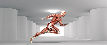 Male muscular system running in a white room. This is a 3d render illustration