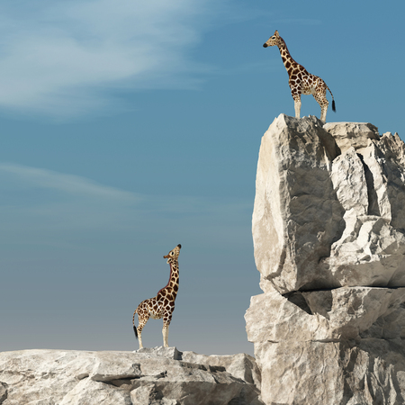 Giraffe looks up to another giraffe at higher altitude on a rock. This is a 3d render illustration Stockfoto