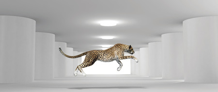 cheetah running in a white room with columns. This is a 3d render illustration Stockfoto