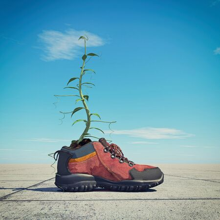 Plant growing into a shoe. This is a 3d render illustration. Stock Photo