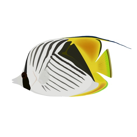 Reef fish  Vector