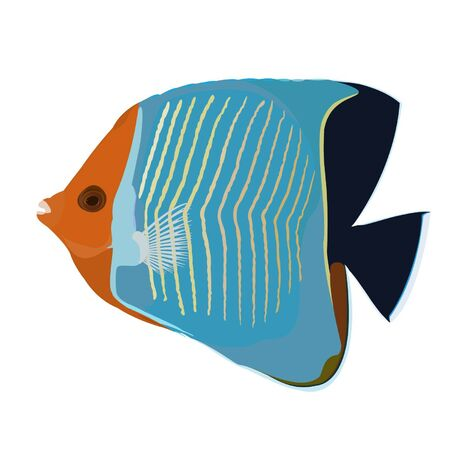 butterfly fish: reef fish  Illustration