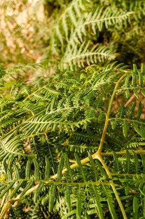 green branches in a pine forest Zdjęcie Seryjne