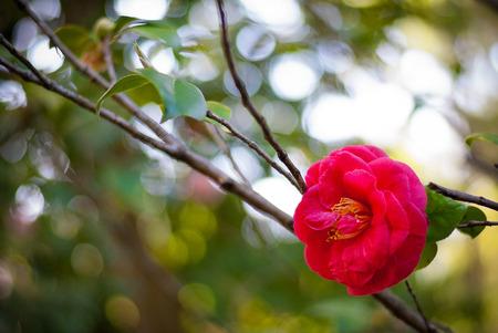 Rosaceae in Pisa Botanical Garden (Italy)