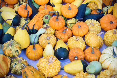 composition of pumpkins  Stock Photo